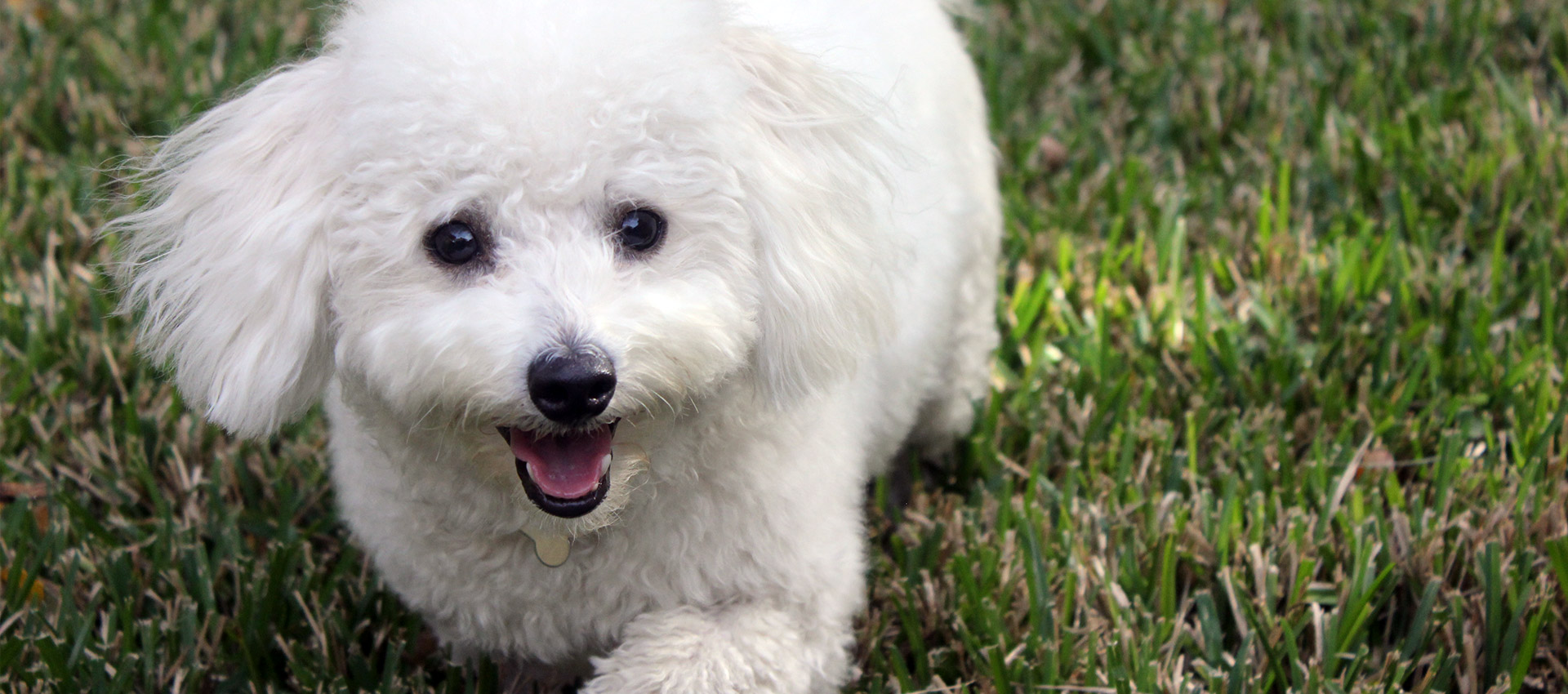 A Refined Canine: Dog Training Services, Puppy Training Services and Dog Boarding in Austin, Round Rock and Georgetown